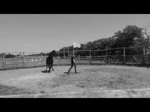 Bodenarbeit-mit-einem-Mustang-Hengst-pferdetraining
