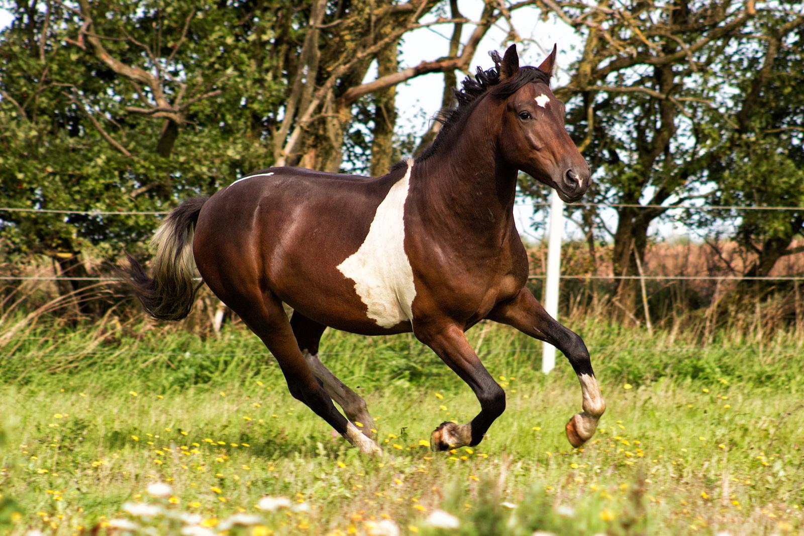 Mustang Geronimo